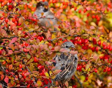 selective focus photography of gray bird