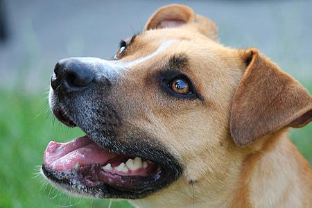close-up photography of tan dog