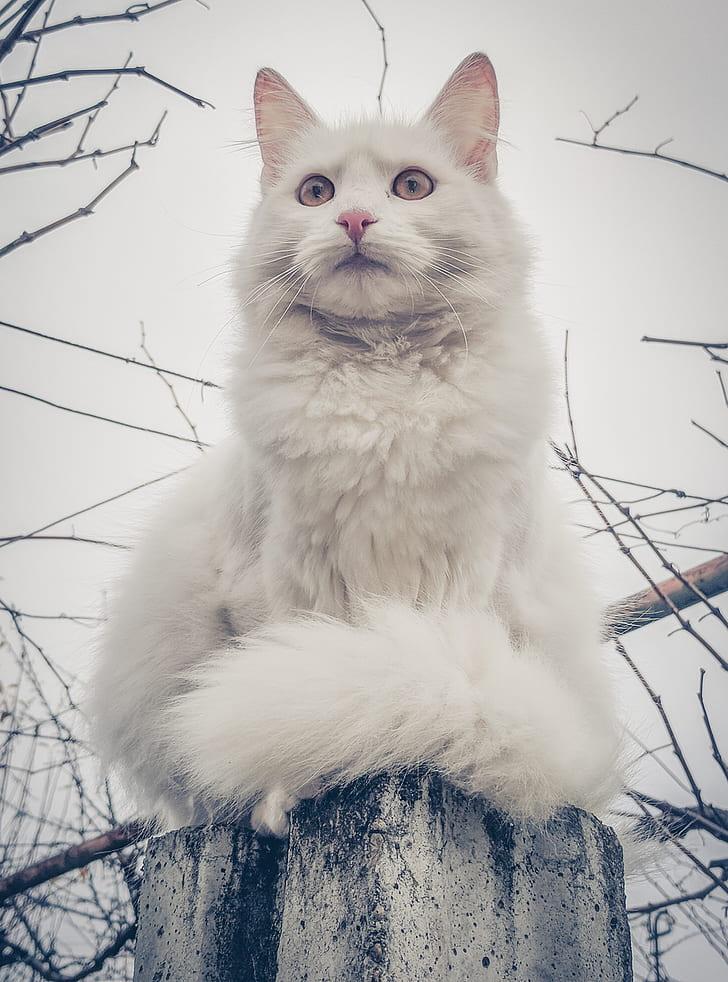 cat, white cat, fur, cute, animal, feline
