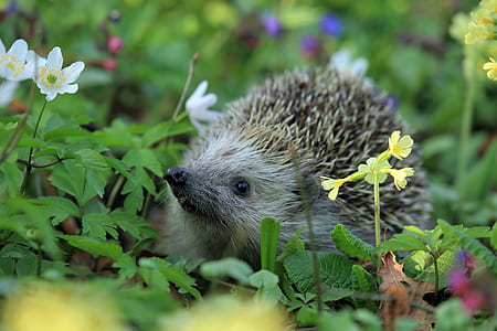 brown hedgehog on flowers at daytime