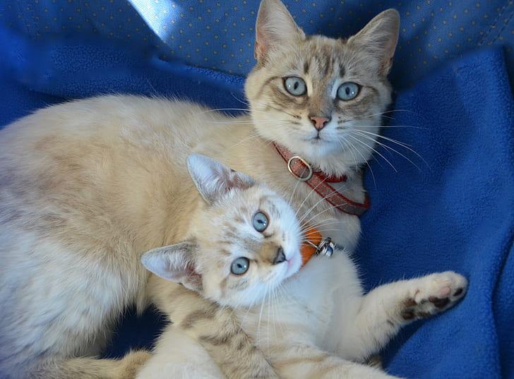 brown cat beside kitten lying on blue textile