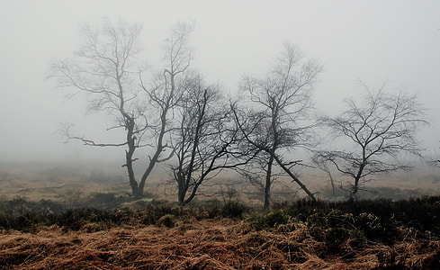 grass field with dead trees during foggy weather
