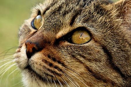 macro photography of tabby cat's head