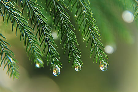 green leaf plant with dew