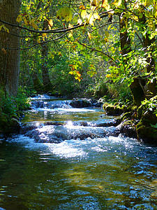 flowing water on forest trees