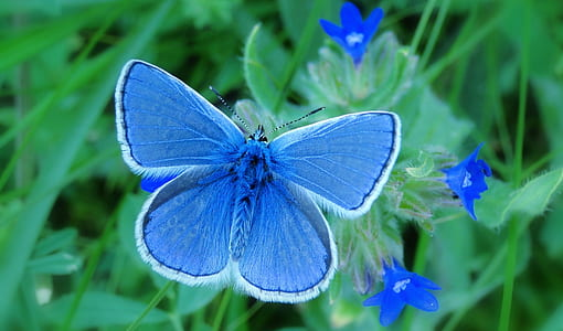 common blue butterfly on green leaf