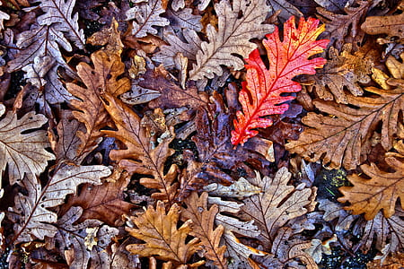 brown, gray, and red leaves