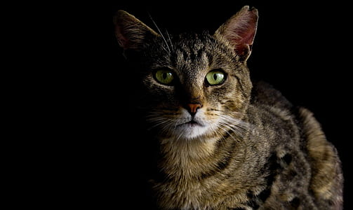 photography of brown tabby cat