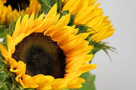 close up photograph of a sunflower