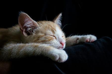 orange tabby cat sleeping on black textile