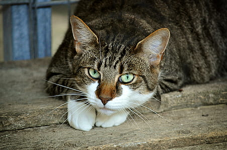 brown and white cat on wooden plank