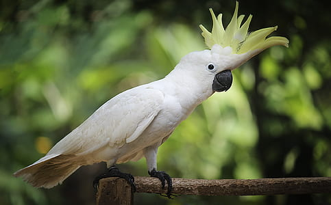 white and green bird