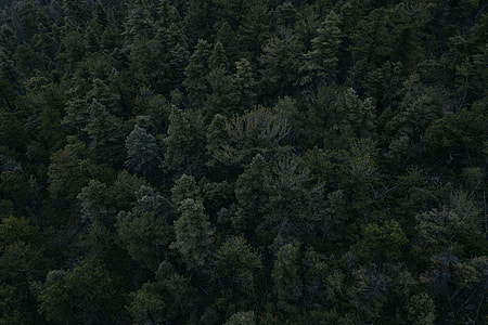 aerial view of green pine trees