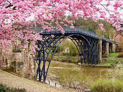 cherry blossom tree over black bridge