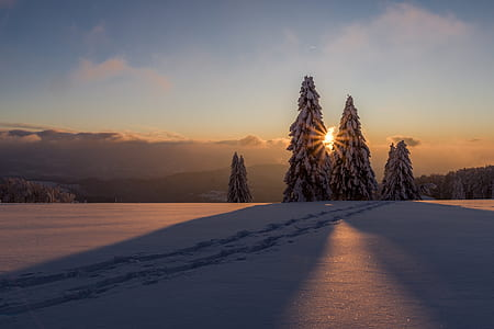snowcapped pine trees on mountain taken during sunset