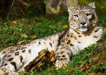 leopard on green leaves