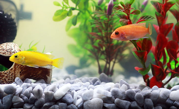yellow and orange fishes beside green and red plant