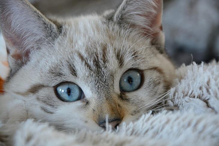shallow photography of gray kitten