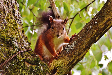 brown and white squirrel on brown tree