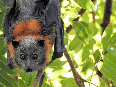 black and brown fruit bat on tree branch