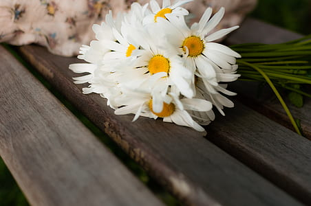 White Daisy on Brown Wood
