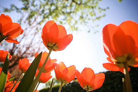 orange poppy flower at bloom during daytime