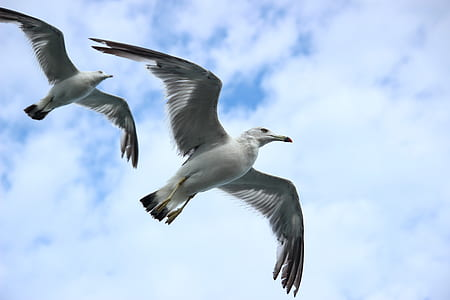 timelapse photography of two white birds flying during daytime