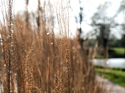 Photo of Brown Grass Field