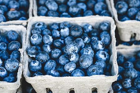 blueberry lot