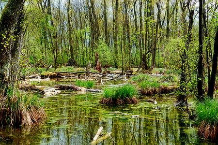 green forest and swamp