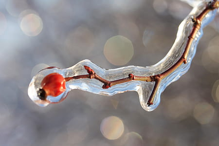 macro and bokeh photography of brown twig covered by water