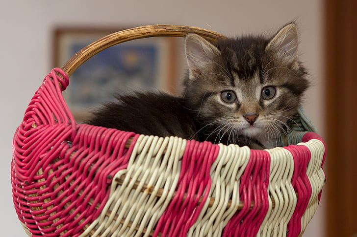 gray and black cat inside pink and white wicker basket