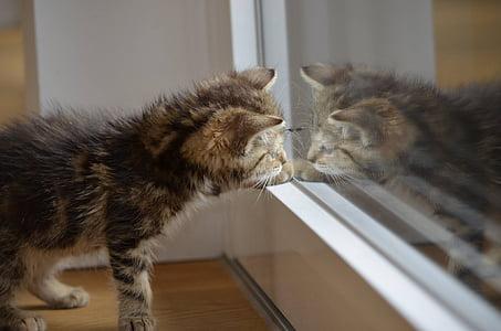 short-fur brown kitten
