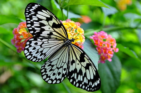 black and white butterfly pierched on yellow clustered flowers taken during daytime