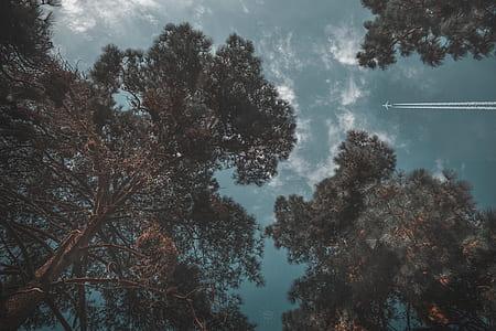 Gray Plane on Sky