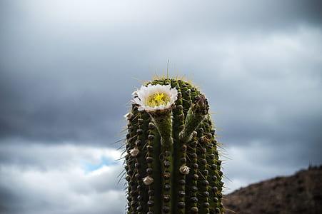 Close-up Photography of a Cactus