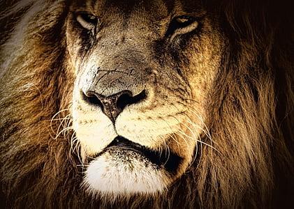 brown lion face
