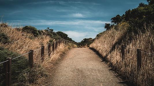 brown road between hay at daytime