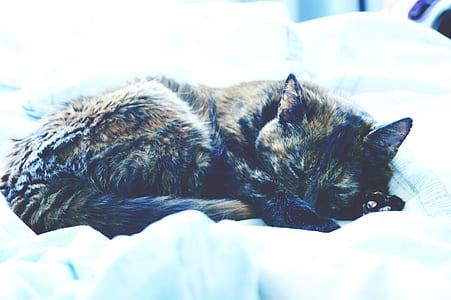 Black Tabby Cat