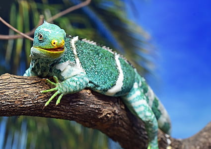 green and white iguana on branch