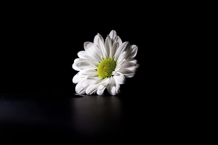 White flower captured on a dark background
