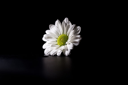 White flower captured on a dark background