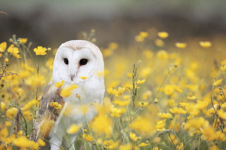 white owl in yellow flower field during daytime