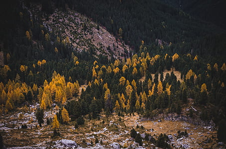 photo of green and yellow trees