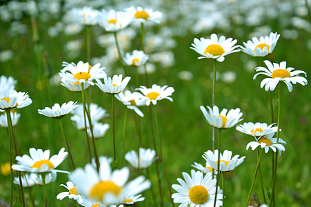 selective focus photo of white and yellow petaled flowers