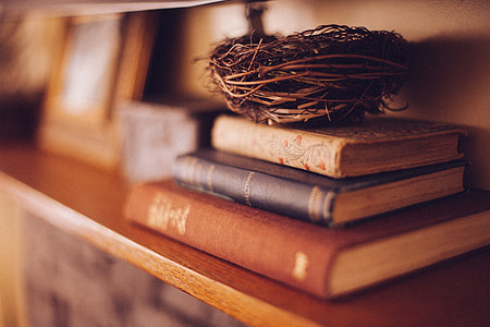 selective focus photography of three book filed with brown bird nest on top