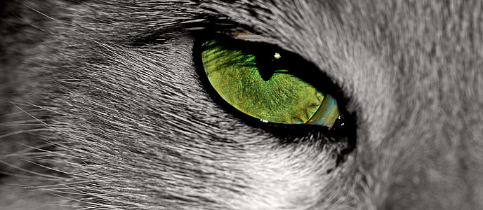 close up photograph of animal eye