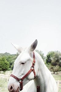 closeup photo of white foal