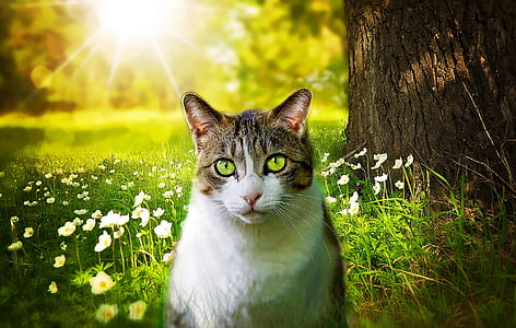 brown tabby cat sitting on green grass