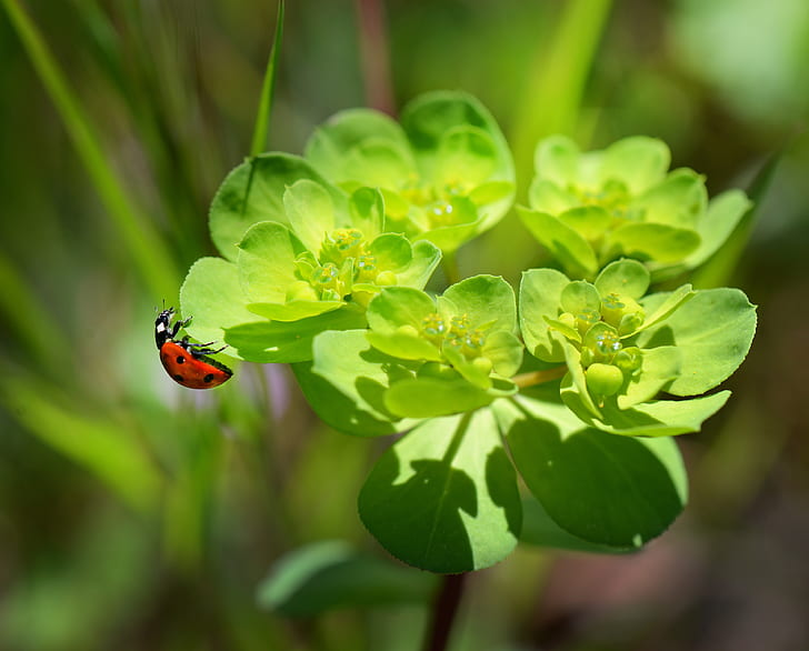 red and black ladybug on green flowering plant